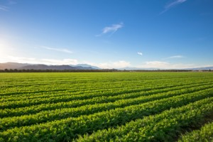 Organic Farm Land Crops In California. Blue skies, palm trees, multiple layers of mountains add to this organic and fertile farm land in California.