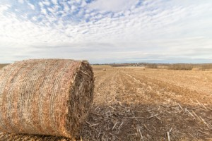 Round hay bale in a field