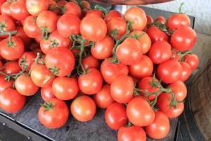 pomodori in grappolo